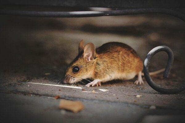 bloccare punti di accesso ai topi